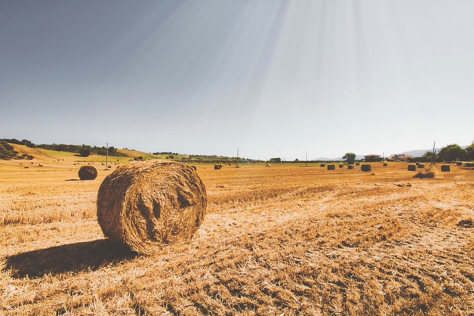Straw, Field, Agriculture, Summer, Wheat, Nature, Rural
