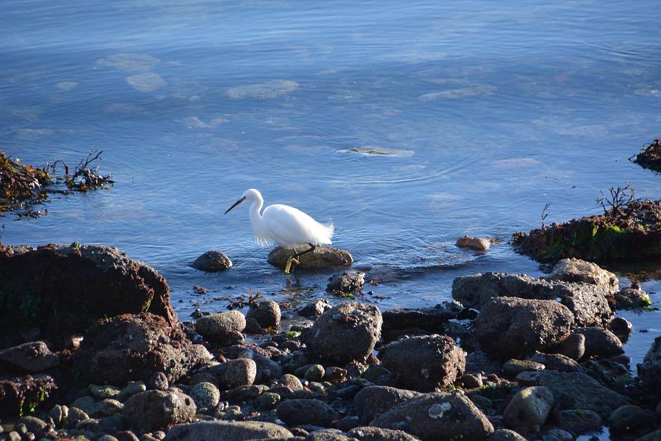 Bird, Egret, Wader, Fauna, Animal, White, Nature