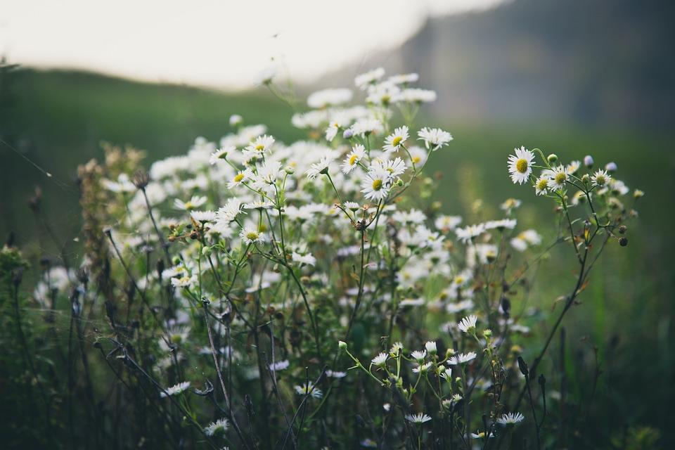 White, Flowers, Blur, Garden, Nature