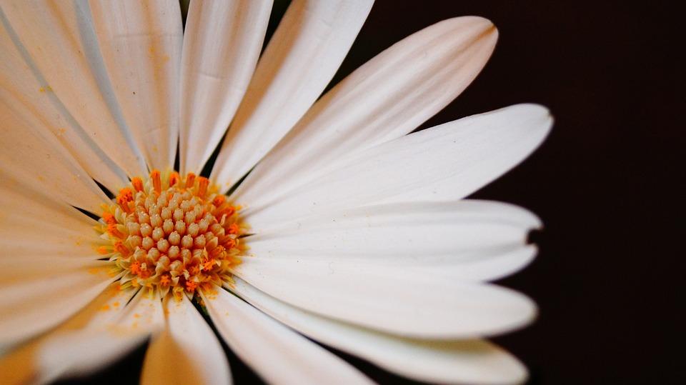 Flowers, Flower, White, Nature