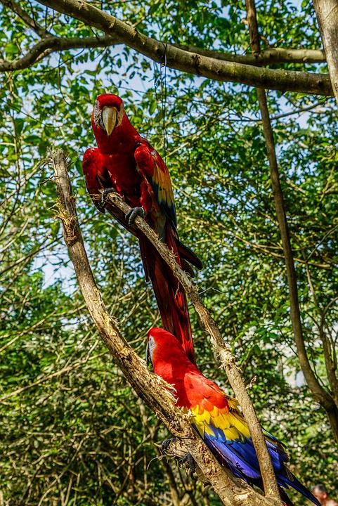 Birds, Tropical, Colorful, Nature, Feather, Wild