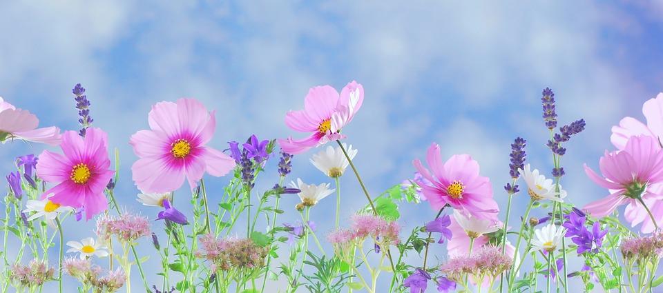 Wild Flowers, Flowers, Plant, Macro, Nature