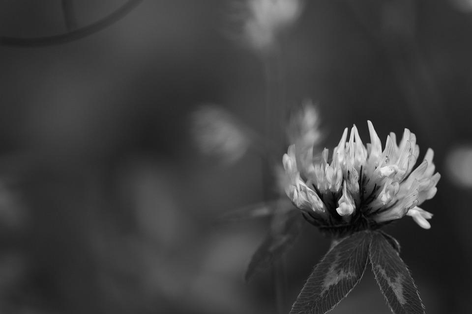 Wild Flowers, Summer Flower, Nature, Summer