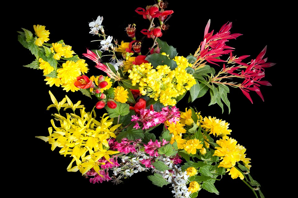 Flowers, Nature, Wild Growth, Creative