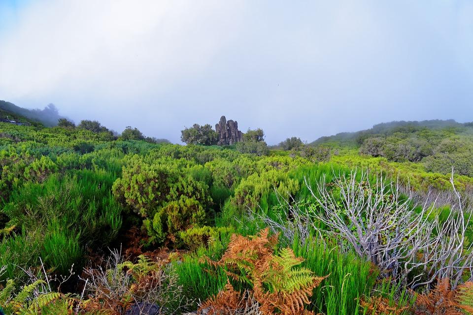 Landscape, Madeira, Highlands, Nature, Wild, Green