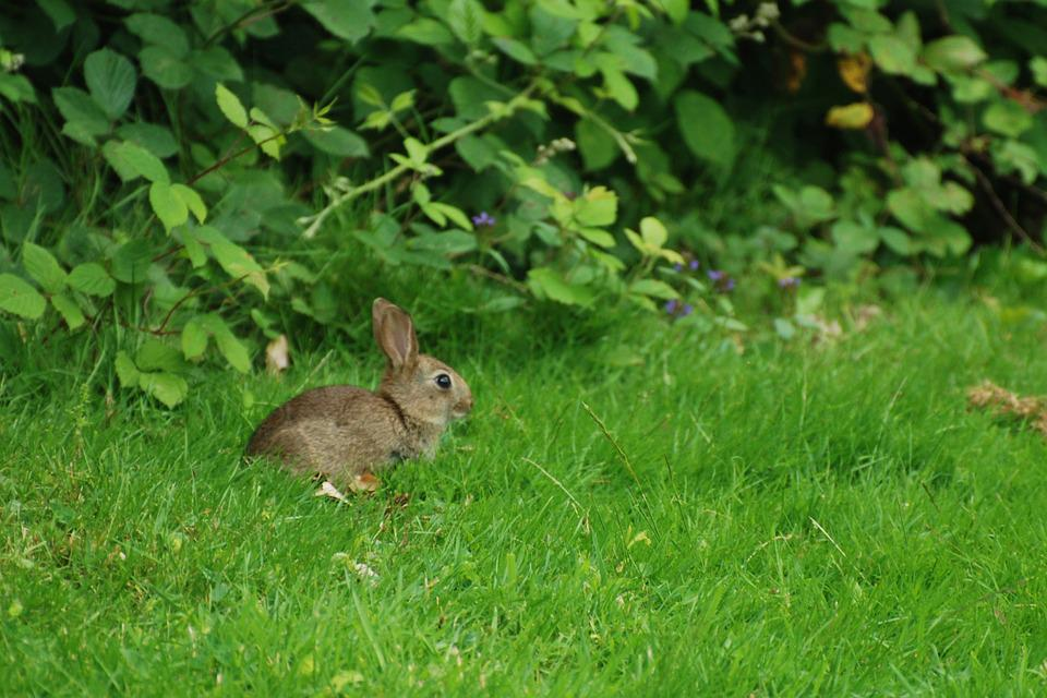 Nature, Wild, Wild Rabbit