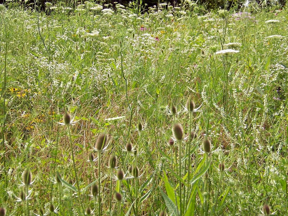 Wildflowers, Weeds, Summer, Field, Nature, Blossom