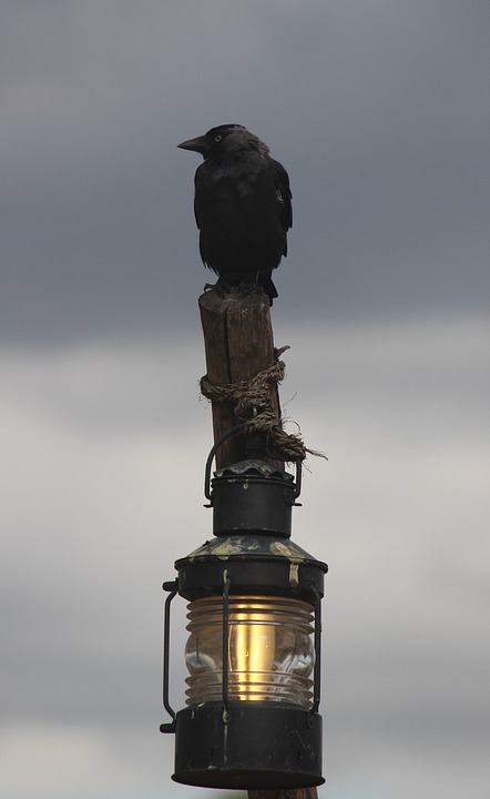 Blackbird, Wildlife, Bird, Animal, Nature, Black, Crow