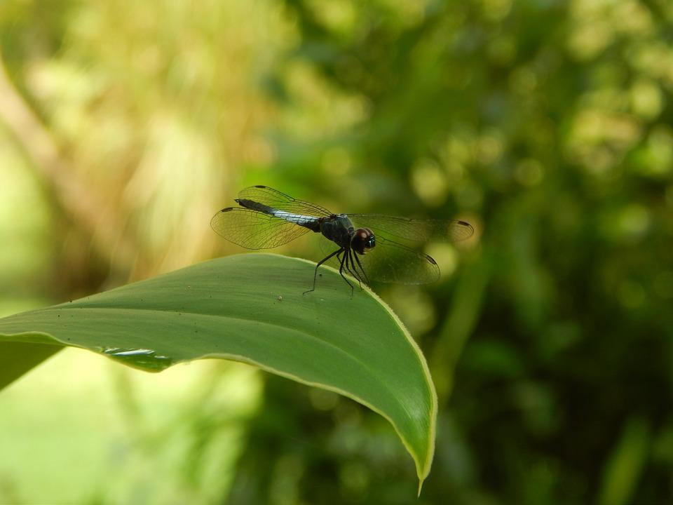 Dragonfly, Nature, Insect, Fly, Wildlife, Macro, Green