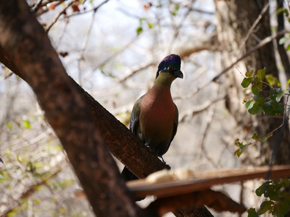 Bird, African, Wildlife Photography, Animals, Nature