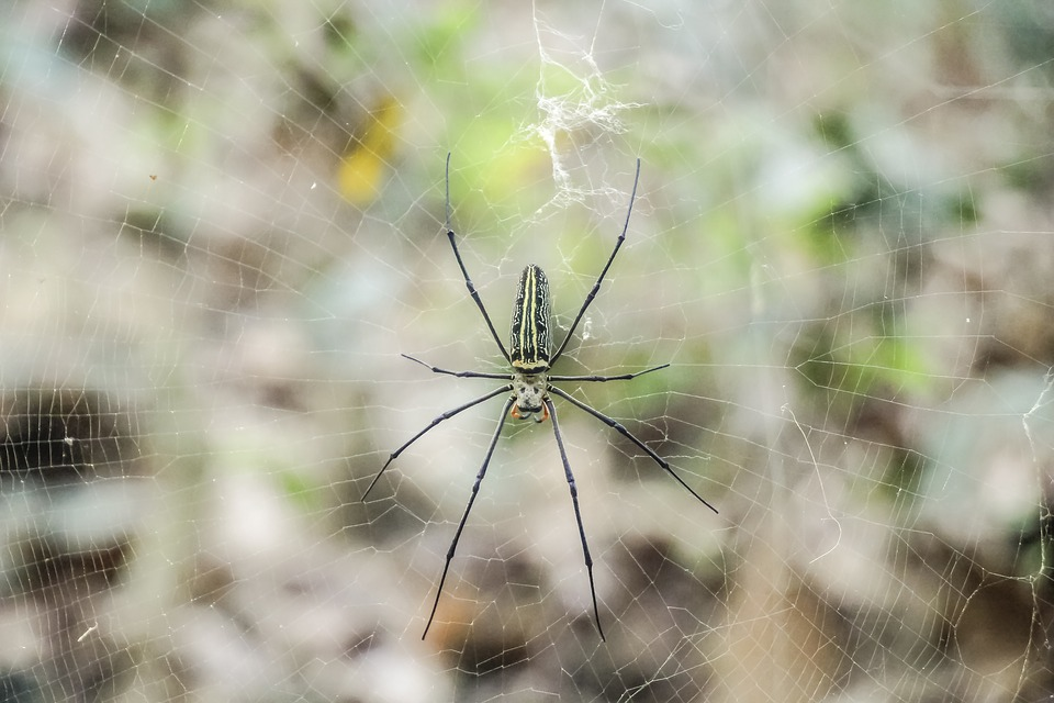 Nature, Insect, Spider, Outdoors, Closeup, Wildlife