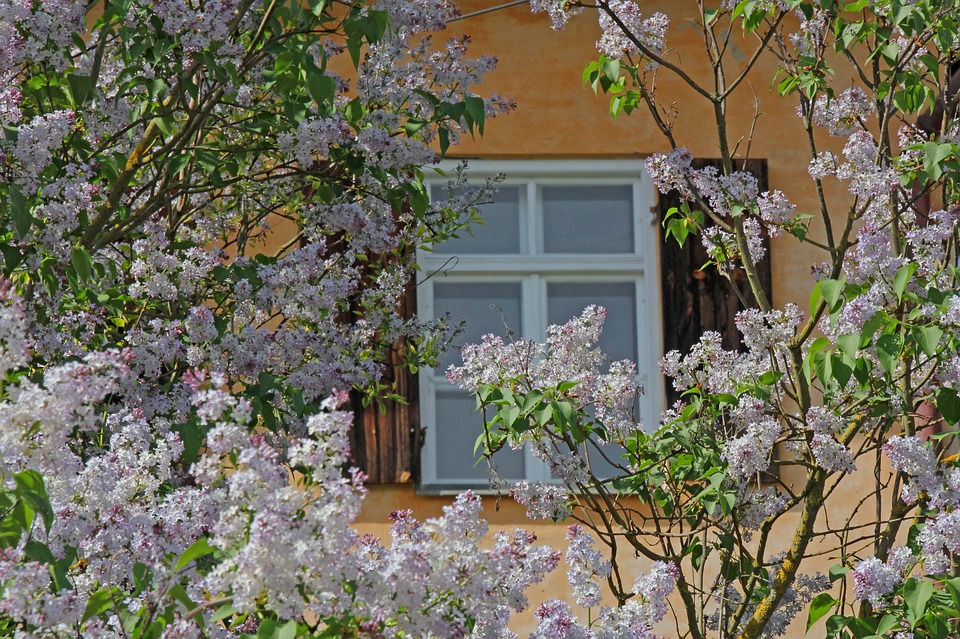 Window, Background, Flowers, Nature, Window Frames
