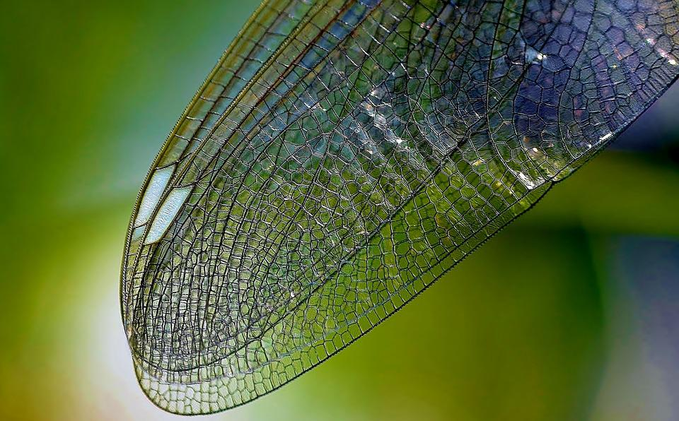 Dragonfly Wing, Nature, Close, Insect, Wing, Texture