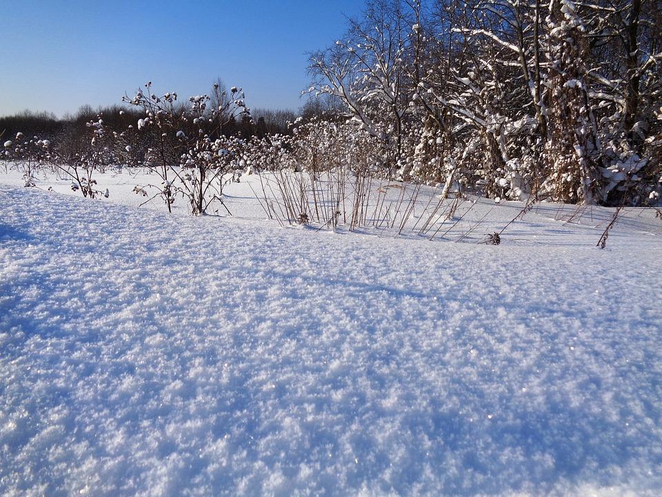 Winter, Snow, Leann, Coldly, Nature, Landscape