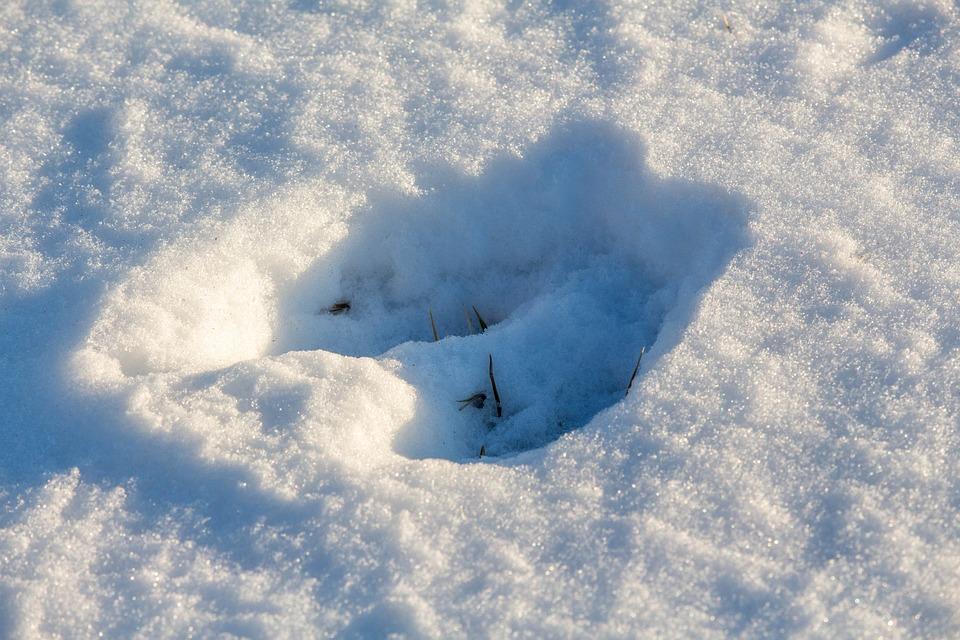 Snow Print, Deer, Nature, Winter, Foot Print