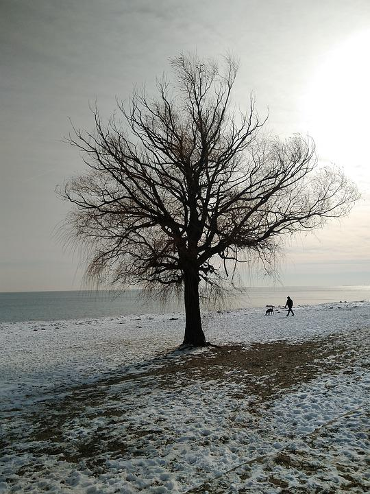 Tree, Landscape, Nature, Water, Winter, Dog, Cold