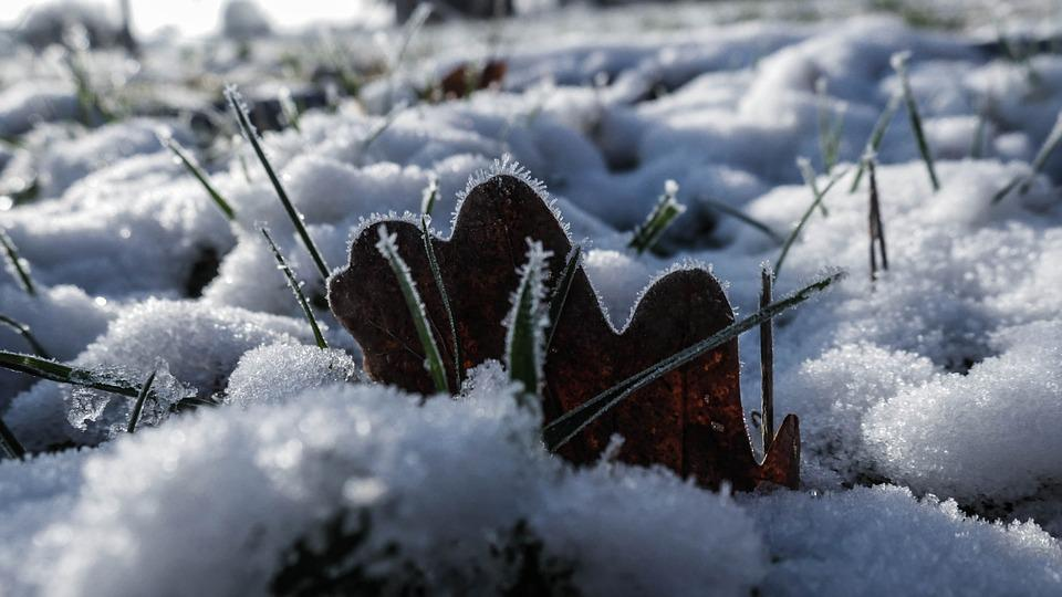 Winter, Leaf, Frost, Frozen, Nature, Cold, Crystal