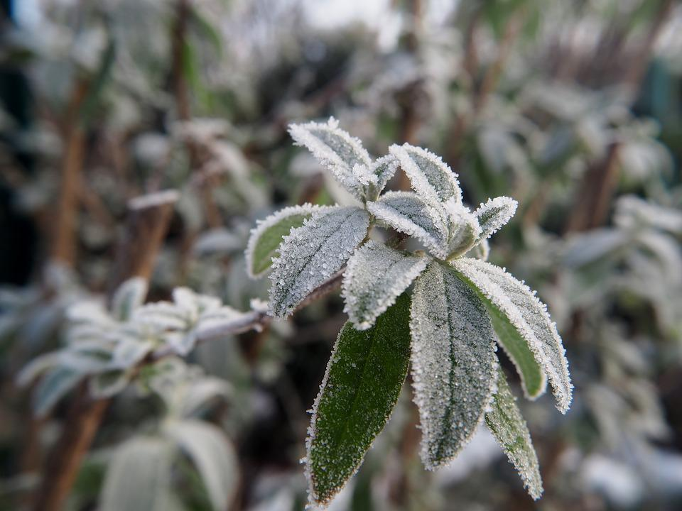 Frost, Leaves, Plant, Close, Winter, Nature, Background
