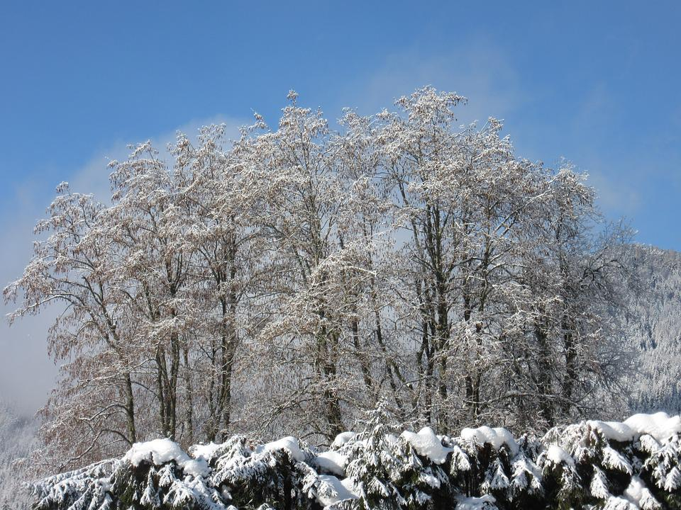 Trees, New Zealand, Winter Magic, Frost, Cold, Nature