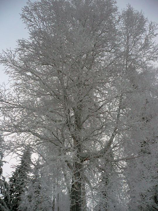 Winter, Trees, Winter Magic, Snow, Cold, Nature