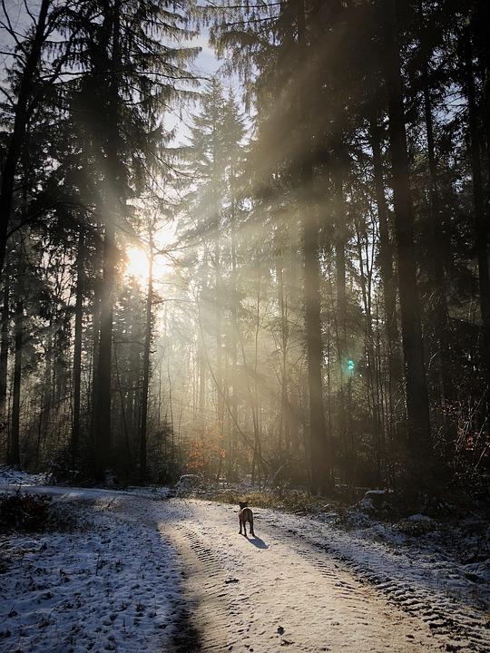 Forest, Backlighting, Nature, Sun, Winter, Rest, Mood