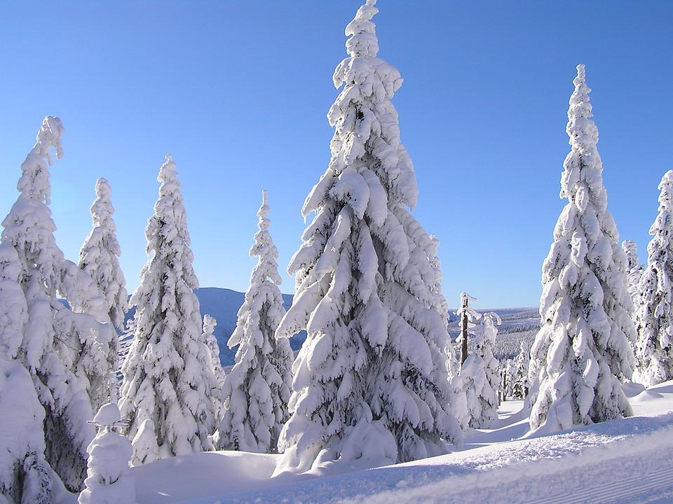 Winter, Snow, Trees, Nature