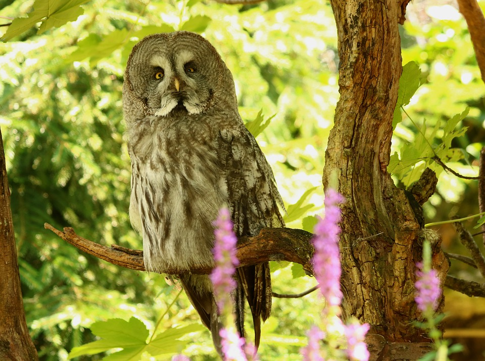 Bart Owl, Owl, Bird, Nature, Eyes, Feather, Wisdom