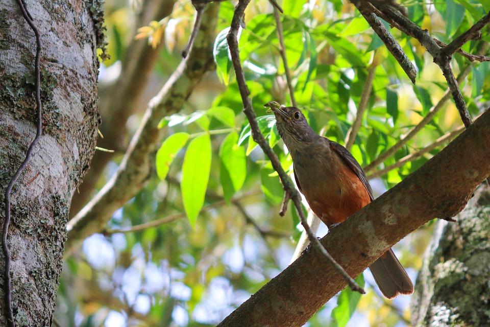 Tree, Nature, Wildlife, Wood, Birds