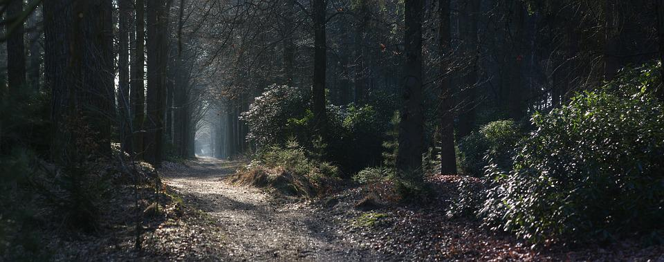 Panoramic, Nature, Wood, Fog, Tree, Forest, Path, Fairy