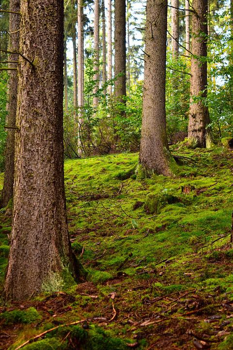 Mystical, Wood, Nature, Tree, Landscape, Moss, Forest
