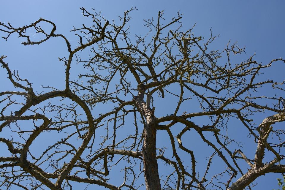 Tree, Death, Nature, Wood, Tree Trunk, Old, Plant