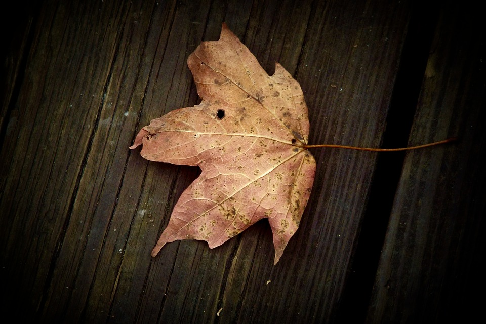Leaf, Table, Fall, Wood, Nature, Plant