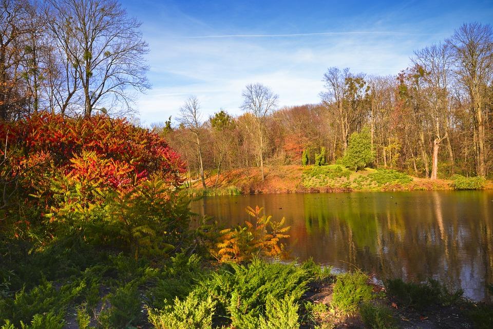 Fall, Nature, Tree, Landscape, Leaf, Season, Wood, Park