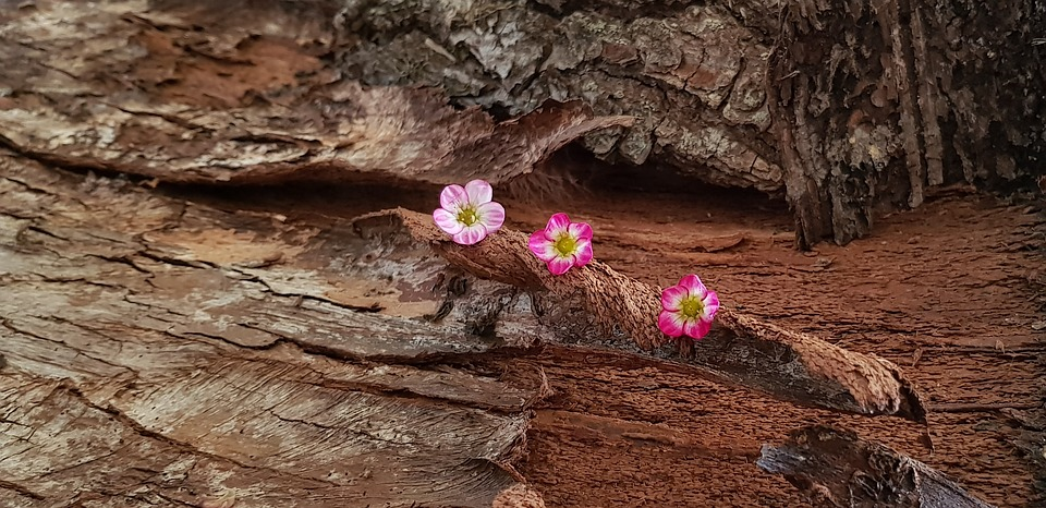 Still Life, Nature, Wood, Tree Cave, Bark, Flowers