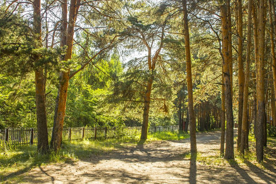Forest, Summer, Nature, Trees, Green, Wood