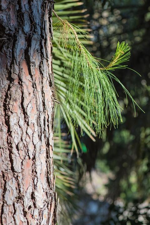 Free photo Devoured Structure Wood Nature Tree Bark Log Tree - Max ...