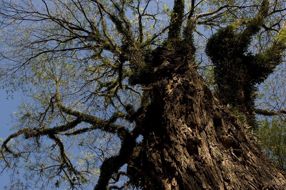 Tree, Nature, Natural, Green, Wood