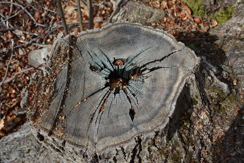 Nature, Outdoors, Wood, Tree