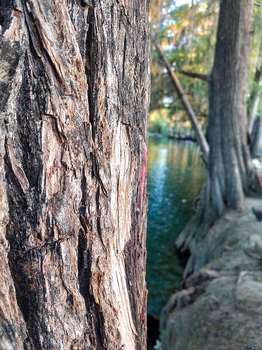 Tree, Wood, Nature, Outdoors, Body Of Water, Landscape