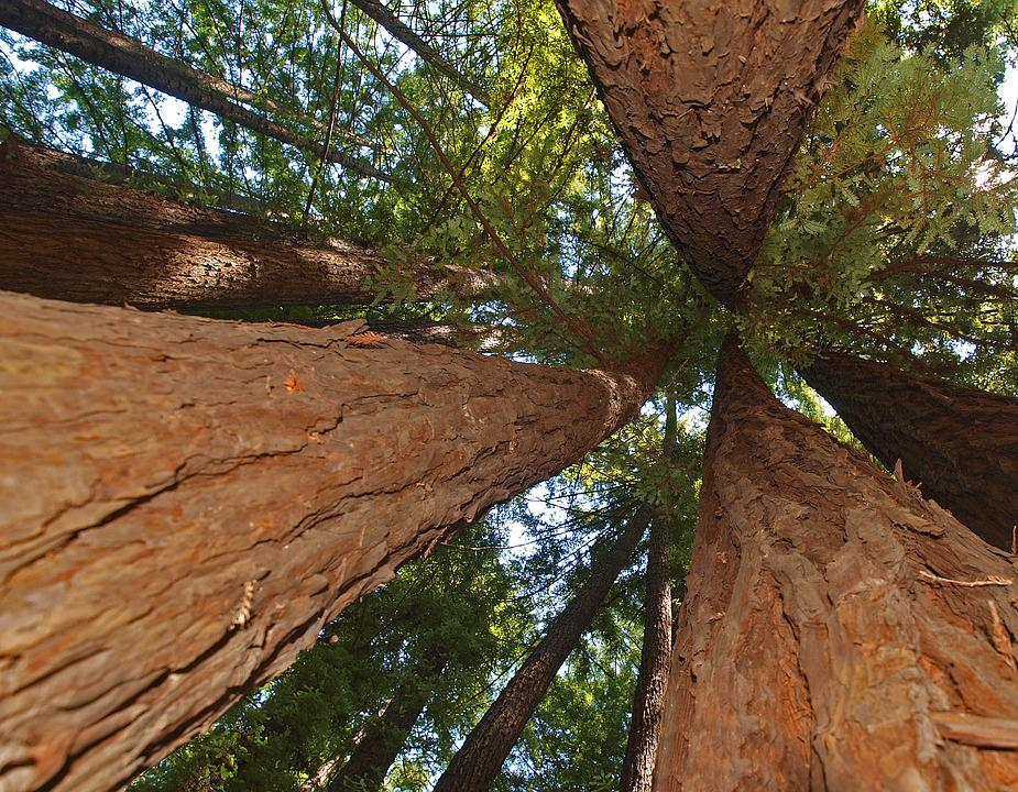 Tree, Nature, Outdoors, Park, Wood, Travel, Landscape