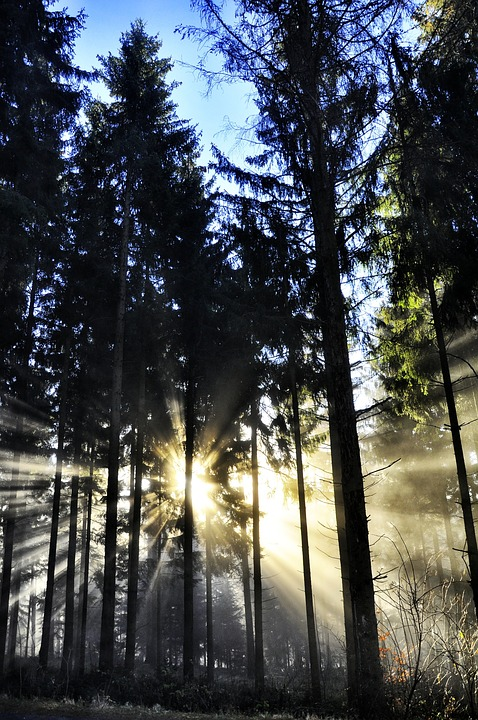 Nature, Wood, Tree, Sun