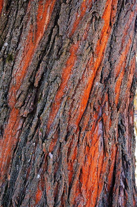 Wood, Tribe, Bark, Nature