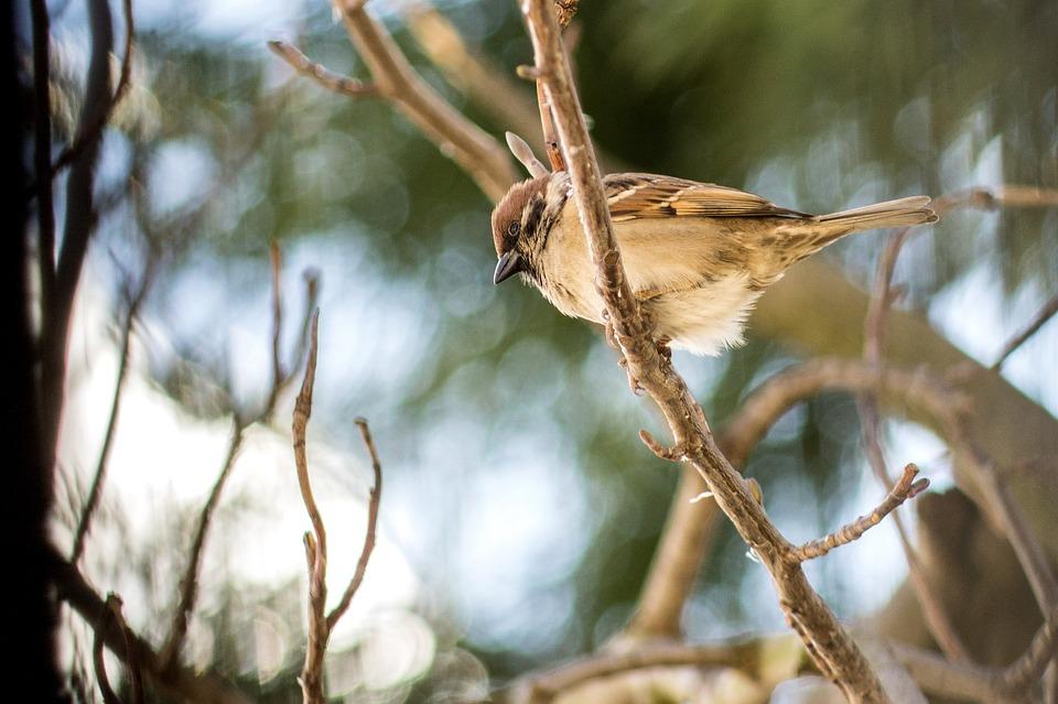 Tree, Nature, Bird, Wildlife, Outdoors, Wood, Animal