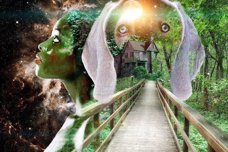 Artfully, Right, Nature, Dog, House, Wooden Bridge