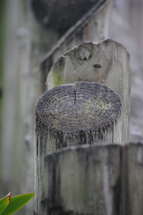 Fence, Logs, Wood, Wooden, Tree, Nature, Old, Timber