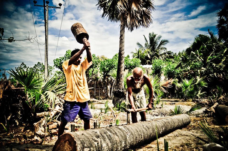 People, Work, North, Sri, Lanka, Nature, Ceylon, Garden