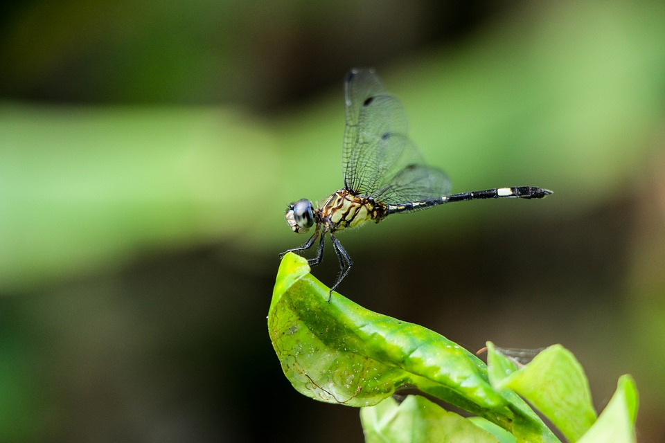 Dragonfly, Nature, Insect, Green, World, Wings