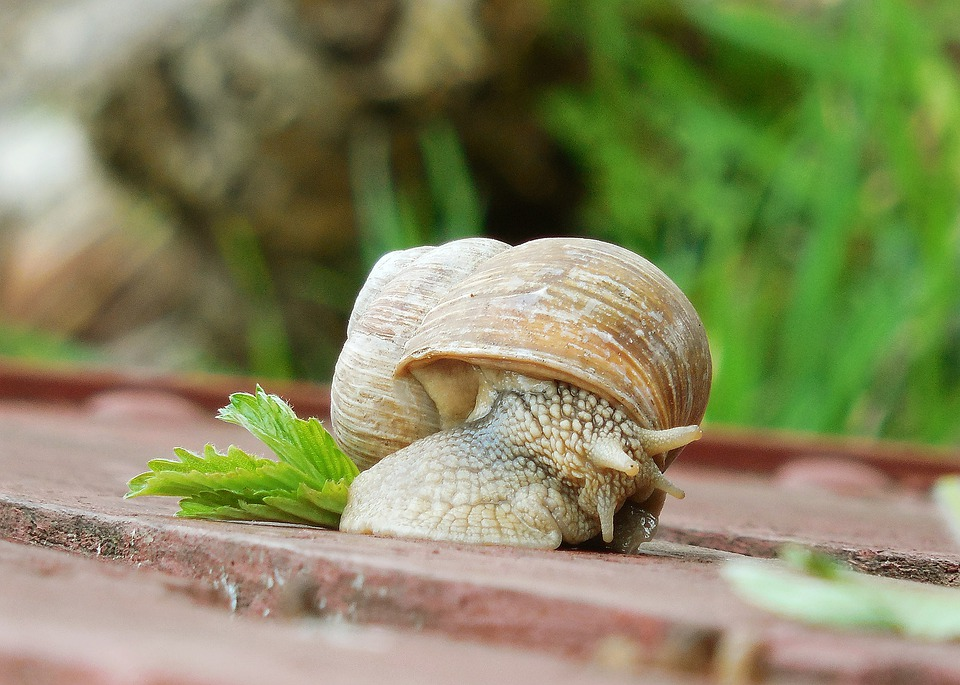 Worm, Conch, Snail, Nature