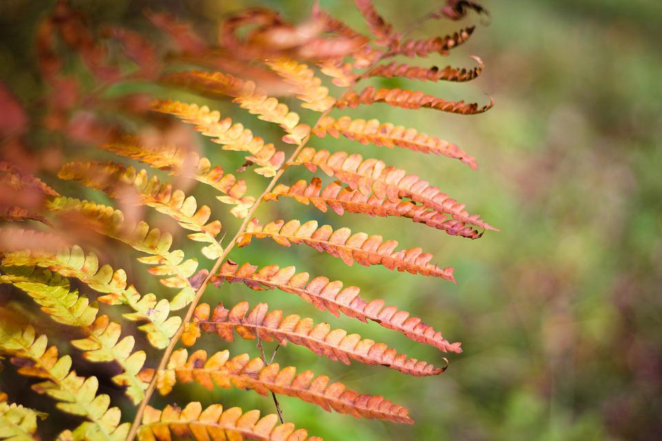 Fern, Forest, Woods, Autumn, Yellow, Orange, Nature