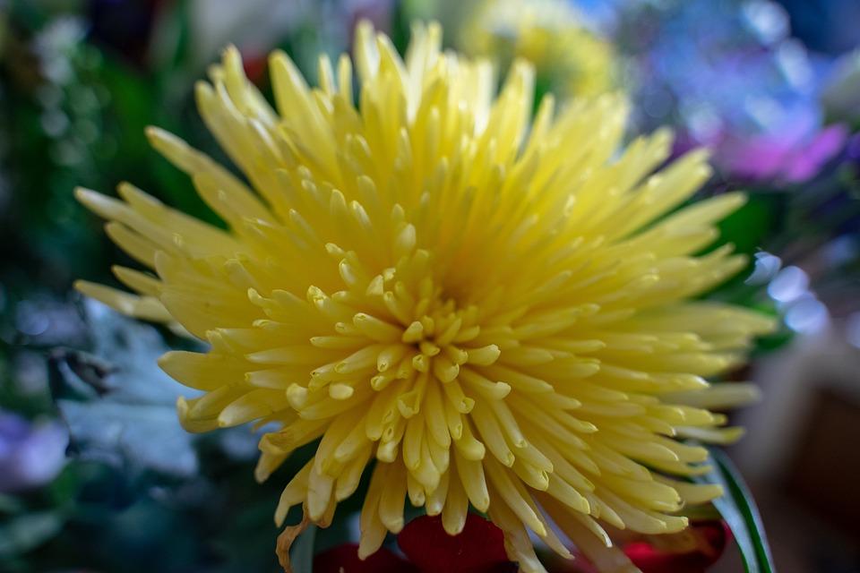 Flower, Yellow, Bloom, Summer, Nature, Blossom, Bloom